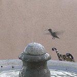 Besuch von Kolibri