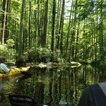 Bald Cypress tour with Todd