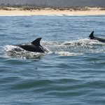Dolphins keeping pace with boat