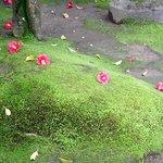 苔と椿のコントラスト