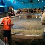 Fish petting pool