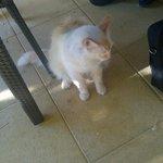 Cat of Mercure, Sophia Antipolis