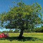 Slane Farm campsite