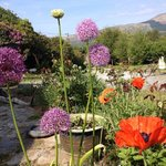 The garden at Bellatrix