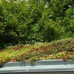 Toit vegetalisé  sur une petit pavillon  à l'entrée du jardin botanique