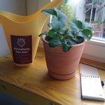 Zimmerpflanze, die von Gästen schön gepflegt wird