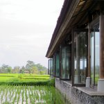 The hotel restaurant in the rice paddies