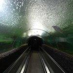 Under Water Tunnel