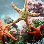 Ucluelet Aquarium