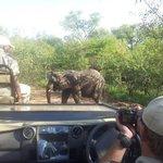 no último safari conseguimos ver os elefantes
