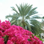 beautiful landscaping and flowers