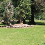 Yew Tree and Sculpture garden