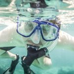 Snorkelling in the cove