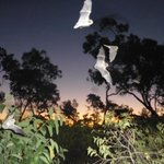 Micro Bats on the amazing Wildlife at Sunset tour