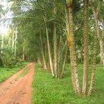 Walking through the plantation