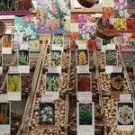 Flower Market / Bloemenmarkt