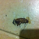 2 days in a row, cockroach in our room. Hotel seems to be clean but what is going on behind the