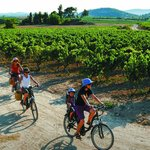 Cycling the ebike on the vineyards