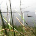 Newfoundland Zen