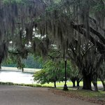 Spanish moss at the entrance.