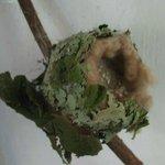 Nest Board