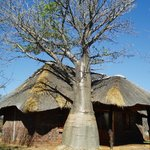 small cottage with baobab