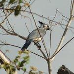 Birds! Rancho Cecilia