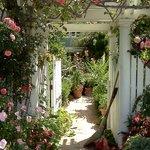 Gate leading to a beautiful private home on Coronado.