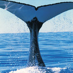 """The whales are here"" Book your package NOW"