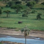 Male elephant across the river
