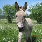 One of our friendly donkeys.