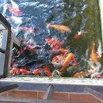 Voici les poissons qui ont pris le petit dejeuner avec moi !