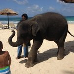 dont miss the baby elephant