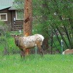wildlife Estes Park