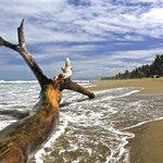 Stranded tree