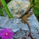 Nice lizards!