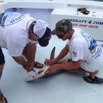 Pete and Bob removing the hook from the Hammerhead. It was amazing how it settled down as soon a