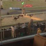 Foto de Greyhound Stadium - Curraheen Park
