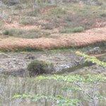 Close up of the peat bog