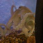 beautiful little octopus