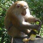 monkeys were every where