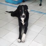 May, resident hostel dog