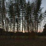 Coastal Gardens Bamboo Farm