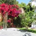 beautiful plants around the resort