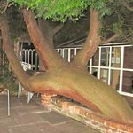 The weird and wonderful tree