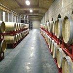 The underground barrel cellar
