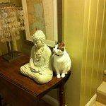 sweet housecat