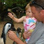 Friendly emus