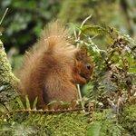 Squirrel taken from Ashtree Lodge