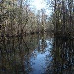 Francis Beidler Forest Audubon Park - Goodson Lake